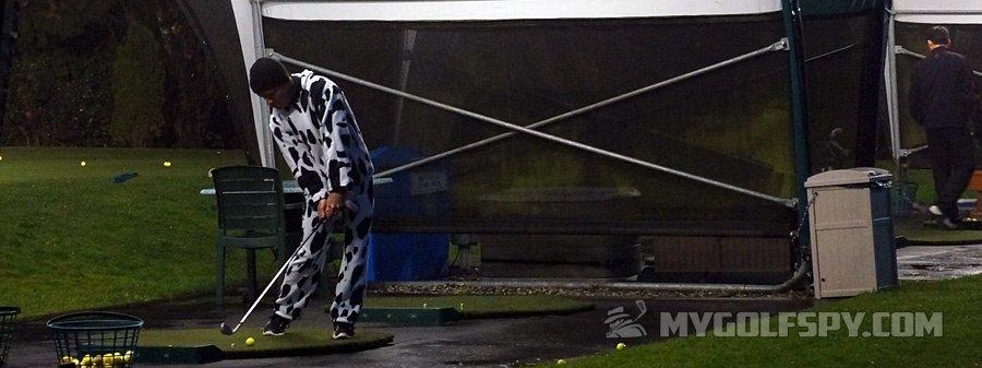 range-cow.jpg