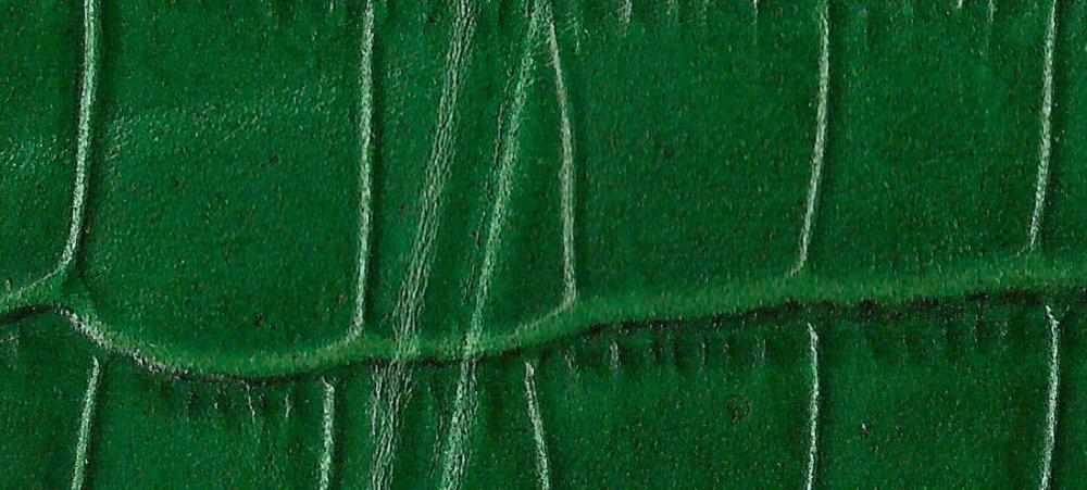 Green Alligator.jpeg