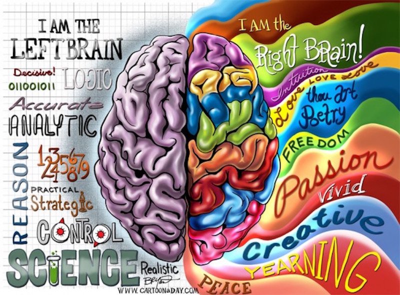 right-brain-left-brain copy.jpg