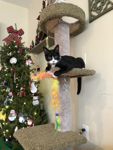 Jack's Christmas