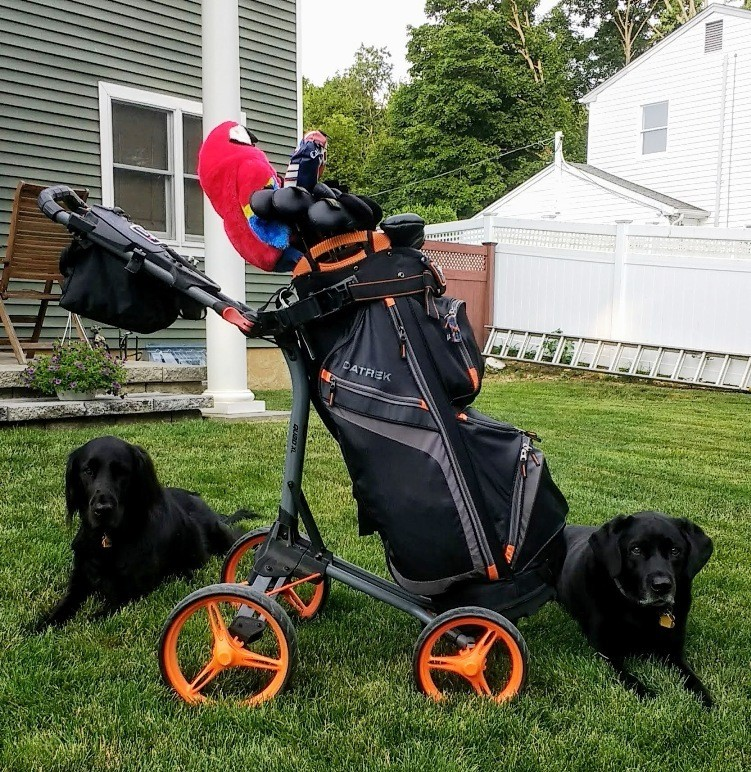 pushcart_and_puppies.jpg.02f717a116c3bc0ad96fa445371b107b.jpg