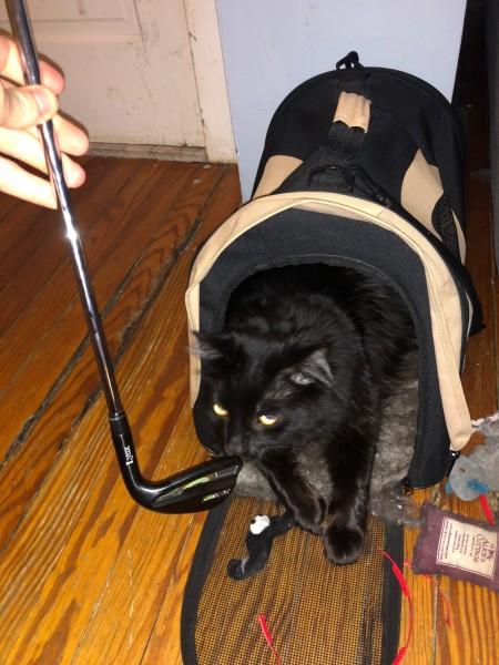 Official Lynx Black Cat Tester